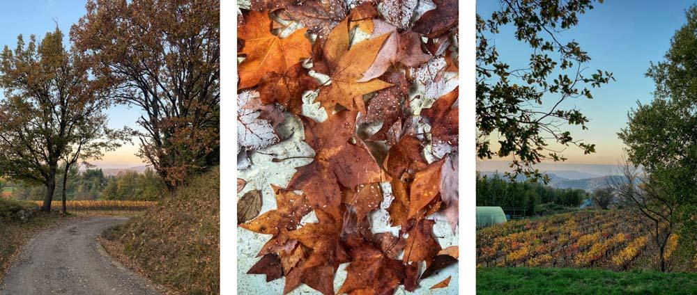 Provence Autumn Tour